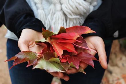 Embracing Autumn photo